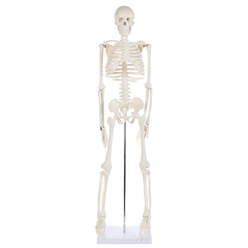 Anatomy Lab Human Skeleton Model, 34' Mini Skeleton Replica Mounted to Base for Display, with Removable Skull Cap, Movable Arms and Legs, and Details of Human Bones