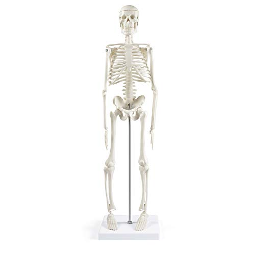 """Human Skeleton Model for Anatomy,17""""Mini Human Skeleton Model with Movable Arms and Legs,Scientific Model for Study Basic Details of Human Skeletal System"""