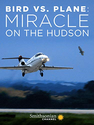 Bird vs. Plane: Miracle on the Hudson