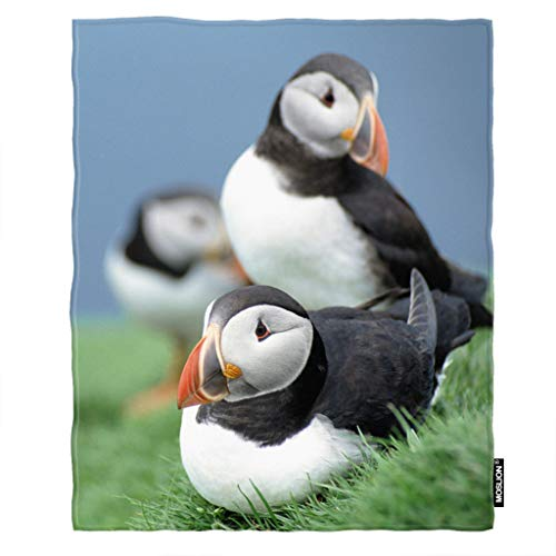 Moslion Soft Cozy Throw Blanket Birds Puffins Grass Sky Fuzzy Warm Couch/Bed Blanket for Adult/Youth Polyester 30 X 40 Inches(Home/Travel/Camping Applicable)