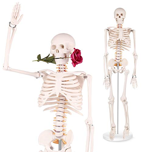 Mini Human Skeleton Model - 34 inch high Anatomical Human Skeleton Model Details of Human Bones with Removable Arms and Legs - 1/2 Life Size