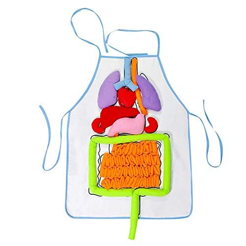 Anatomy Apron Human Body Organs Awareness Educational Insights Toys for Children Preschool Science Homeschool Teaching Aids