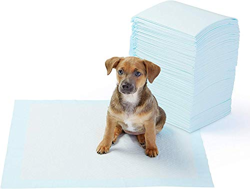 AmazonBasics Dog and Puppy Potty Training Pads, Regular (22 x 22 Inches) - Pack of 100