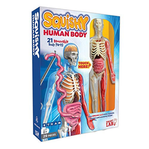 SmartLab Toys Squishy Human Body, Multicolor, Standard