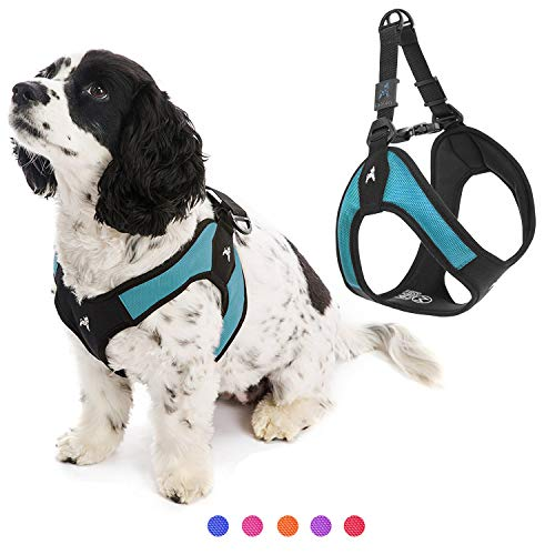 Gooby Dog Harness - Turquoise, Small - Escape Free Easy Fit Patented Step-in Small Dog Harness - Perfect on The Go - No Pull Harness for Small Dogs or Cat Harness for Indoor and Outdoor Use