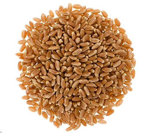 Hard Red Spring Wheat Berries • Non-GMO Project Verified • 25 LBS •100% Non-Irradiated •Certified Kosher Parve • USA Grown • Field Traced • Poly Bag