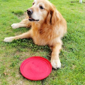 ROBLOCK 2 Pack Dog Frisbee Natural Soft Rubber Interactive Floating Water Flying Disc Toys for Small, Medium, or Large Dogs Outdoor Sport (Red)