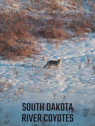 South Dakota River Coyotes