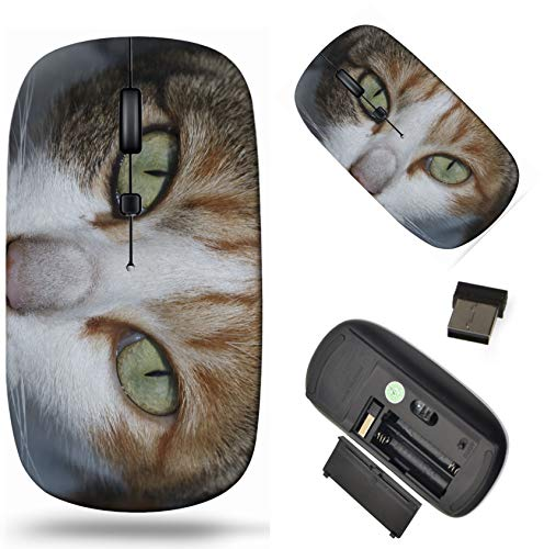 Wireless Computer Mouse 2.4G with USB Receiver, Laptop Mouse Cordless Portable and Silent Click, 1000 DPI for Office and Home, PC Laptop Computer MacBook, Image ID: 34699002 It is Thai cat loo