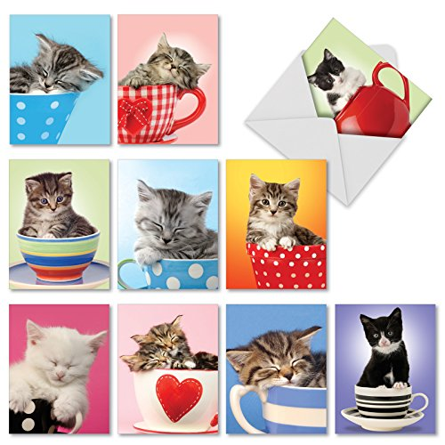The Best Card Company - 10 All Occasion Blank Cat Cards (4 x 5.12 Inch) - Cute Assorted Bulk Card Set - Cup-Cats M3969