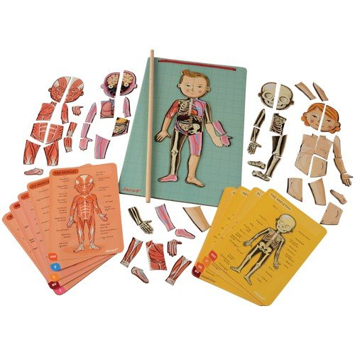 Janod Magnetic Body Puzzle Human Anatomy and Classroom Role Play Kit – Ages 7+ Years