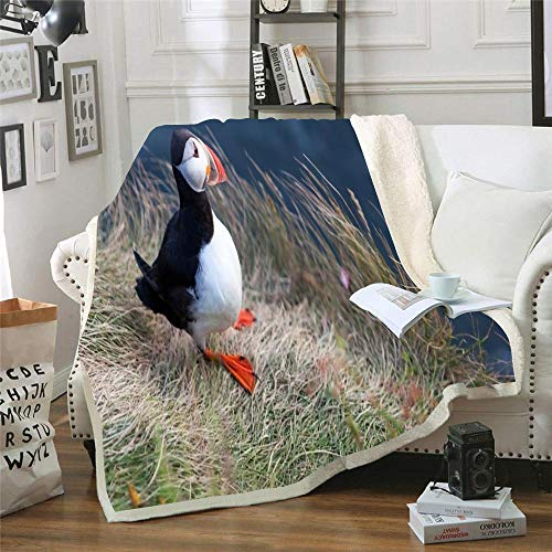 Musesh Fleece Throw Blanket Blanket 50X60 Outdoor Blanket Cute Little The Cliff in Southern Iceland During Summer Vic Birdwatching Puffins Comfortable Blanket for Your Family Wearable Blanket Baby