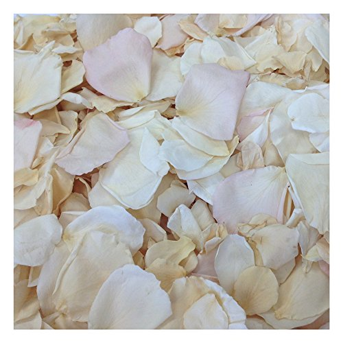 Rose Petal Blend Shabby Chic. 600 Real Rose Petals. Wedding Petals from Flyboy Naturals 15 Cups