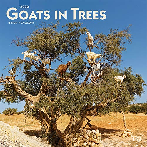 Goats in Trees 2020 12 x 12 Inch Monthly Square Wall Calendar, Domestic Funny Farm Animals