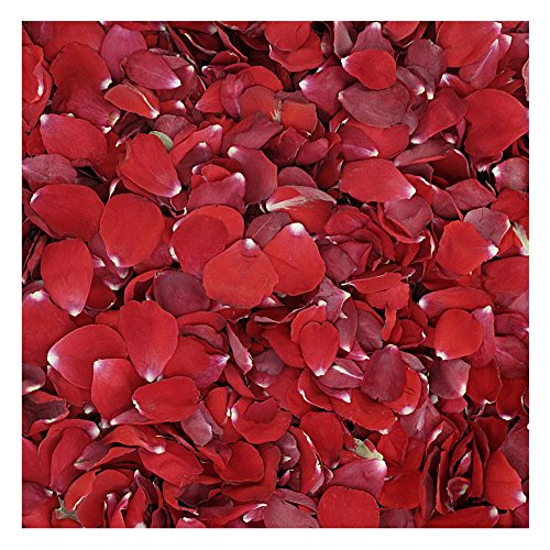 Flyboy Naturals Christmas Red Rose Petals -15 Cups of Preserved Freeze Dried Rose Petals. Wedding Rose Petals from