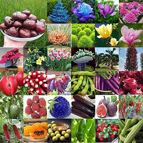 Portal Cool Purple Petra Basil Seeds - 500 Mg - Organic