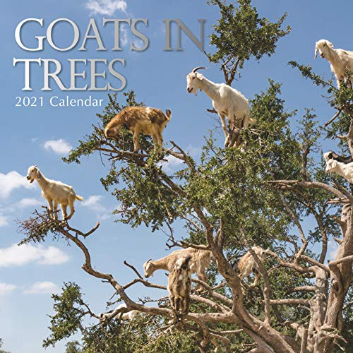 2021 Wall Calendar - Goats in Trees Calendar, 12 x 12 Inch Monthly View, 16-Month, Includes 180 Reminder Stickers