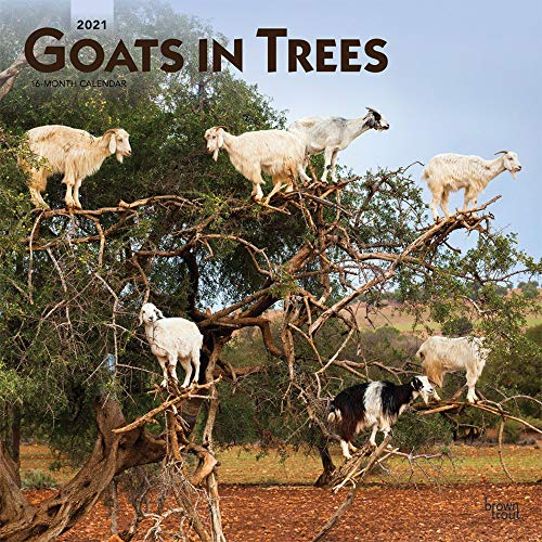 Goats in Trees 2021 12 x 12 Inch Monthly Square Wall Calendar, Domestic Funny Farm Animals (English, Spanish and French Edition)