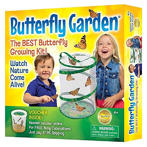 Insect Lore Butterfly Growing Kit - With Voucher to Redeem Caterpillars Later