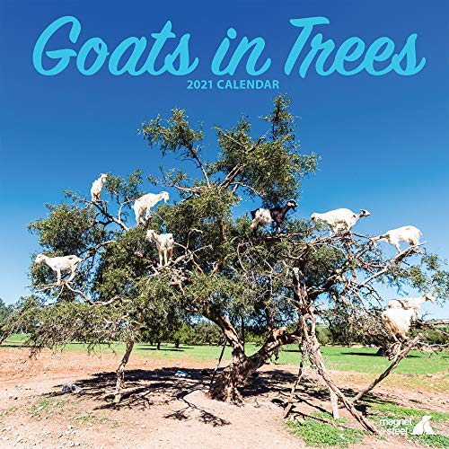 Goats in Trees 2021 Calendar: Farm Animal Wildlife Calendar - Wall Calendar 2021-2022, (12″ x 12″) 16 Months - Animal Lover Gift